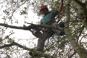 Photo #5: ACADIAN TREE SERVICE. AFFORDABLE&INSURED!