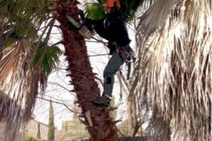 Photo #3: ACADIAN TREE SERVICE. AFFORDABLE&INSURED!