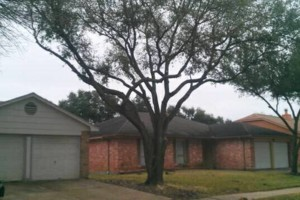 Photo #2: ACADIAN TREE SERVICE. AFFORDABLE&INSURED!