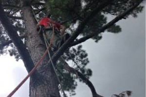 Photo #1: ACADIAN TREE SERVICE. AFFORDABLE&INSURED!