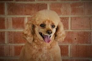 Photo #16: TUCSON DOG GROOMING