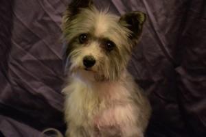 Photo #15: TUCSON DOG GROOMING