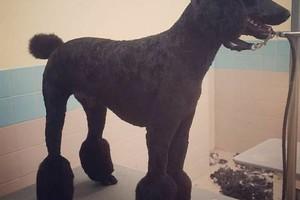 Photo #11: TUCSON DOG GROOMING
