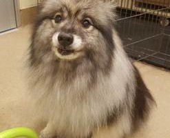 Photo #10: TUCSON DOG GROOMING