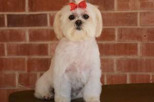 Photo #7: TUCSON DOG GROOMING