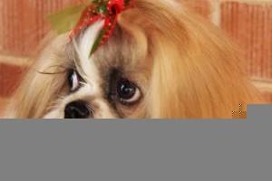 Photo #5: TUCSON DOG GROOMING
