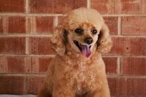 Photo #4: TUCSON DOG GROOMING