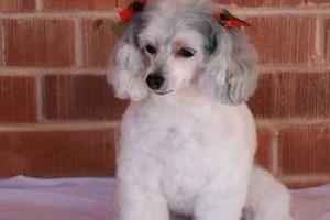 Photo #3: TUCSON DOG GROOMING
