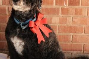 Photo #2: TUCSON DOG GROOMING
