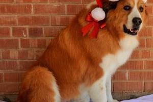 Photo #1: TUCSON DOG GROOMING