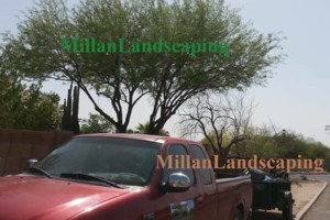 Photo #16: Milla's Landscaping & Maintenance Service