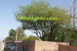 Photo #15: Milla's Landscaping & Maintenance Service