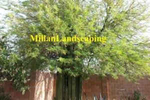 Photo #14: Milla's Landscaping & Maintenance Service