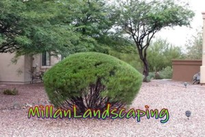 Photo #12: Milla's Landscaping & Maintenance Service