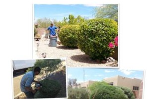 Photo #4: Milla's Landscaping & Maintenance Service