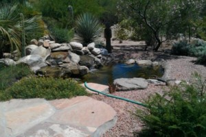 Photo #11: ANE Landscaping