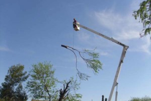 Photo #3: DISCOUNT TREE REMOVAL LOCATED IN SCOTTSDALE