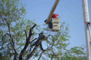 Photo #2: DISCOUNT TREE REMOVAL LOCATED IN SCOTTSDALE