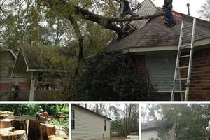 Photo #2: Houston Favian's TREE REMOVAL