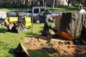 Photo #1: Stump grinder service (1st stump up to 24 inche $90.00)