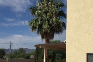 Photo #5: Palm tree trimming by Alex