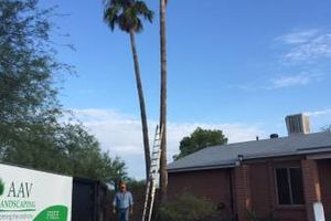 Photo #7: Palm tree trimming by Alex