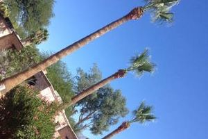 Photo #10: Palm tree trimming by Alex