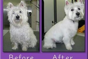 Photo #2: Mobile dog grooming