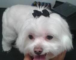 Photo #1: Mobile dog grooming