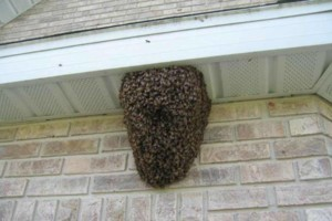 Photo #2: BEE REMOVAL WITHOUT THE COSTLY REPAIRS! NOW OPEN SUNDAYS