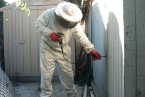 Photo #1: BEE REMOVAL WITHOUT THE COSTLY REPAIRS! NOW OPEN SUNDAYS