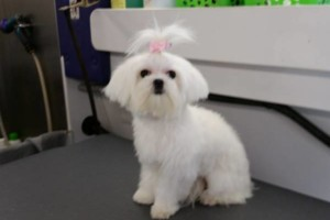 Photo #10: Beautiful View Dog - Mobile grooming...