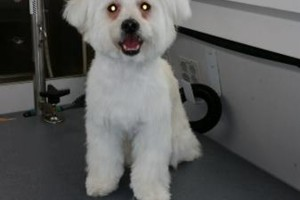 Photo #7: Beautiful View Dog - Mobile grooming...