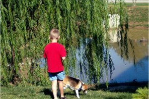 Photo #17: In Home Dog Training