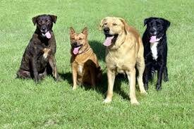 Photo #8: In Home Dog Training