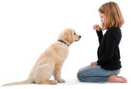 Photo #7: In Home Dog Training
