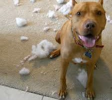 Photo #5: In Home Dog Training