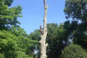 Photo #2: Cheap tree work! We greatly appreciate it!