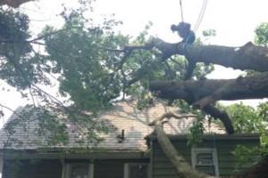 Photo #3: Cheap tree work! We greatly appreciate it!