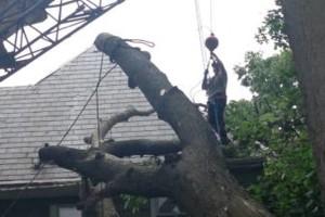 Photo #4: Cheap tree work! We greatly appreciate it!