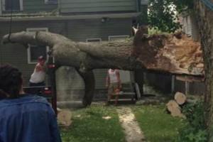 Photo #5: Cheap tree work! We greatly appreciate it!