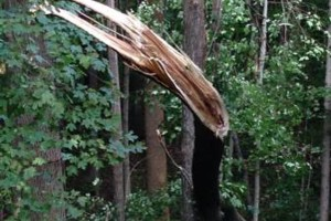 Photo #7: Cheap tree work! We greatly appreciate it!