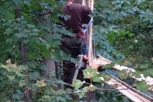 Photo #8: Cheap tree work! We greatly appreciate it!