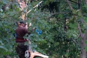 Photo #9: Cheap tree work! We greatly appreciate it!