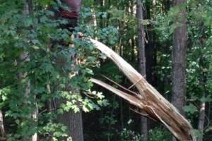 Photo #10: Cheap tree work! We greatly appreciate it!