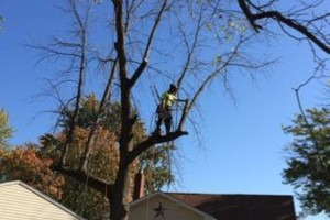 Photo #14: Powell & Sons. Tree Services