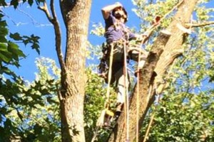 Photo #12: Powell & Sons. Tree Services