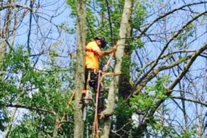 Photo #10: Powell & Sons. Tree Services