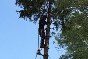 Photo #8: Powell & Sons. Tree Services