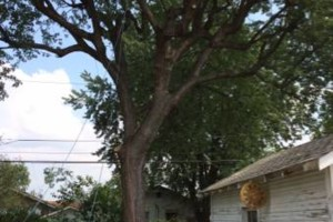 Photo #7: Powell & Sons. Tree Services